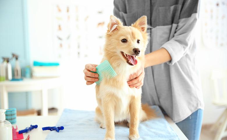 Pet love & Care